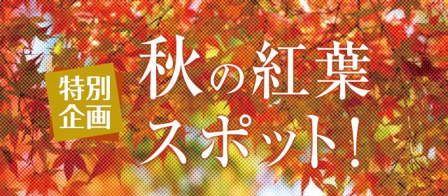 もみじ 舞台 童謡